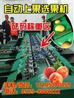 XGJ-11z分选青见大小的机器,供应青见柑橘分选机。