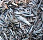 鱼类深加工设备|化冻解冻机厂家价格直销