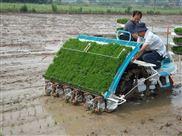 提供水稻插秧机