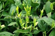 茶葉該如何利用保鮮冷庫安裝利益zui大化?